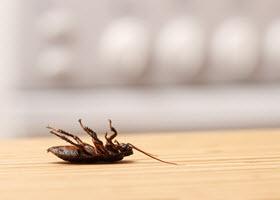 Dead Cockroach in Kitchen