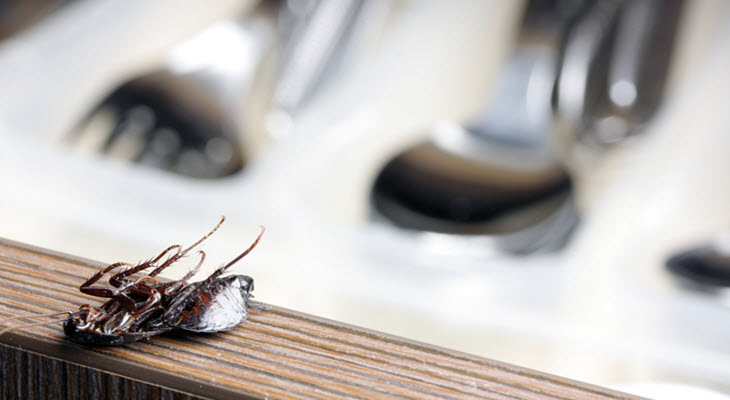Cockroach At Kitchen Countertop