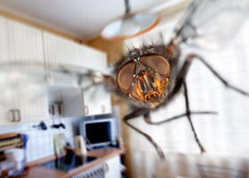 Insects in Kitchen